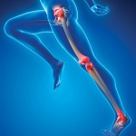 Healthy joints for an active lifestyle
