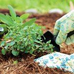 CONTAIN INVASIVE PLANTS