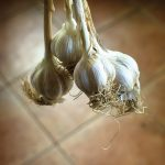 In addition to raw garlic, Kimberly Schneider dehydrates and processes any leftover garlic into garlic powder.