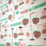 Local strawberries are shipped to markets and grocery stores across our region and throughout Ontario.