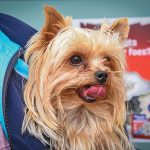 Pet Health - Caring for our four-legged friends