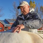 Dr. Mark Gallagher performs chiropractic adjustments on a horse named Chance