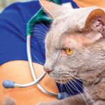 Dr. Michelle Kinoshita with Pooh, the clinic cat at Mountain Vista Veterinary Hospital.