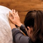 Animal chiropractor Dr. Taron Carruthers works with and Finnan.